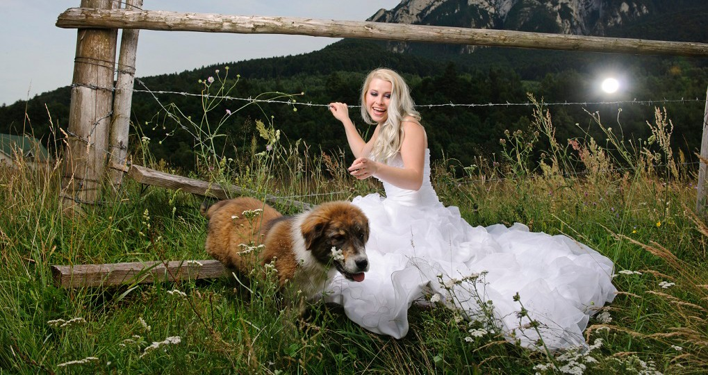 dog and bride small cropped
