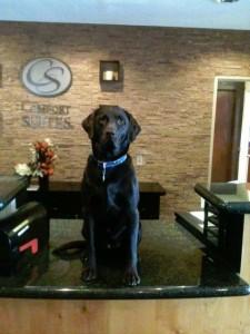 Meet MJ, Director of Pet Operations
