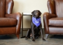 hotel-dog at goldenevergreenhotel